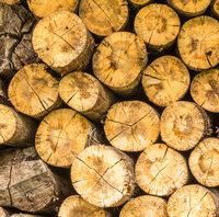 Toras de madeira.