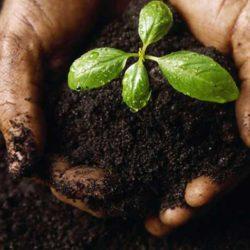 soil-biochar